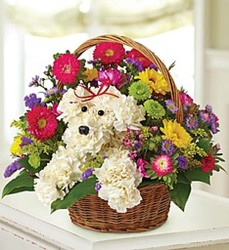 Little Dog in a Basket from Wyoming Florist in Cincinnati, OH